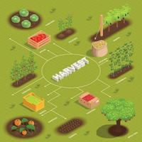 Farming Harvesting Flowchart vector