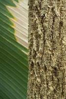 Textura superficial abstracta y trincheras en la corteza del tronco de un árbol foto