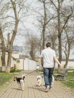 Professional male dog walker walking a pack of dogs on park trail photo