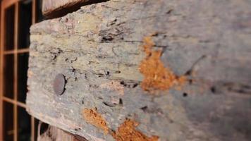 Primer plano 250 fps cámara lenta alejar broma de madera vieja en la pared video