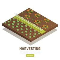 Farming Harvesting Isometric Composition vector