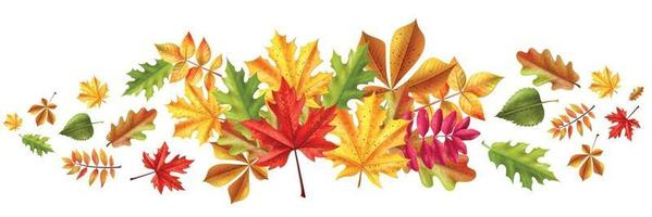 Fall Leaves Realistic Composition vector