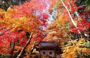 Beautiful Autumn Leaves at komyoji Kyoto JAPAN photo