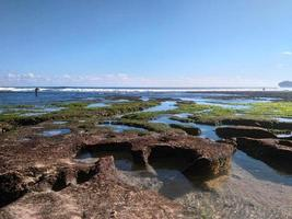 Coral view at low tide photo