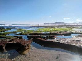 Sea corals at low tide in the morning photo