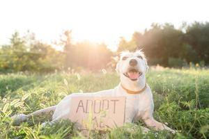 lindo perro de raza mixta con el letrero adoptarme foto