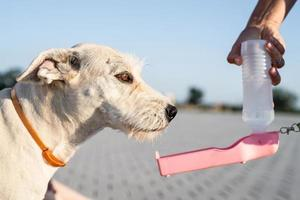 Mixed-breed dog drinking water from a bottle photo