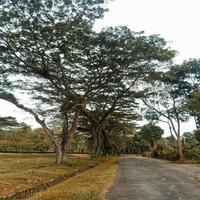 Trees next to a road photo