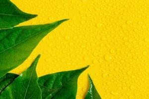 Water drops and leaves on yellow background photo