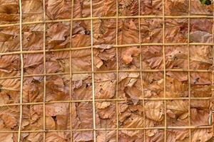 Decorate the walls with dry leaves and background photo