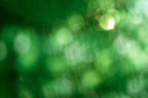 Abstract blur with bokhe of light through the green trees photo