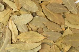 Dried bay leaves isolated on white background photo