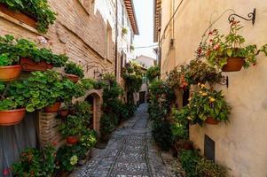 callejón con flores foto