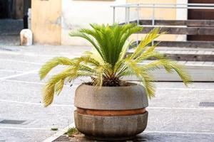 Plant in a planter photo