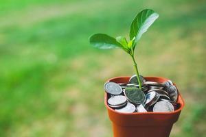 dinero en maceta con cultivo de plantas, concepto de ahorro foto