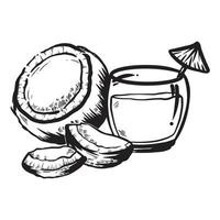 hand drawn black and white illustration of coconut fruit and its water vector