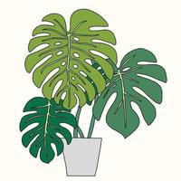 Simplicity monstera plant freehand outline drawing flat design. vector