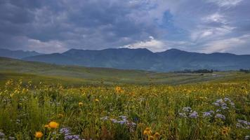 Colorful wildflowers a near Crested Butte, Colorado photo