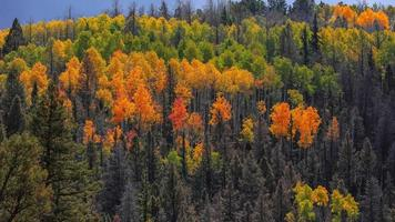 Colorful autumn trees on the mountain top in rural Colorado photo