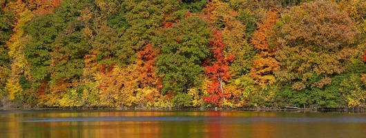 Panoramic view of lush fall foliage in rural Michigan photo