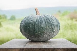 Green pumpkin on wood photo