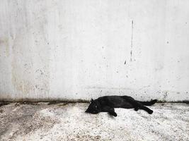 Black cat on white wall background photo