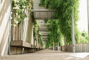 callejón del parque verde, bancos de madera y paredes con rosas blancas foto