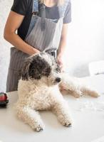 Blonde woman grooming a dog at home photo