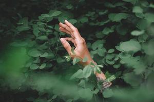 mano de mujer sosteniendo el trébol en el jardín foto