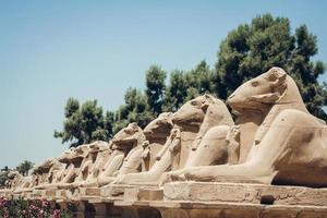 Statues of sphinxes with hieroglyphs in Karnak Temple at Luxor, Egypt photo