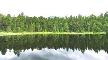 Descripción general de un bosque de pinos reflejándose en el lago foto
