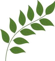 Green branch with simple leaves vector