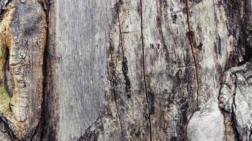 Fondo de textura de árbol natural rugoso, telón de fondo de superficie natural foto