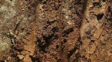 Suelo fangoso de la naturaleza tropical. foto