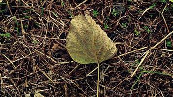 hierba del bosque tropical con hojas caídas foto