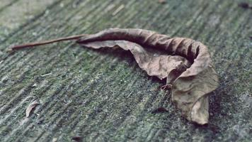 Dry brown leaves that fell to the cement floor photo