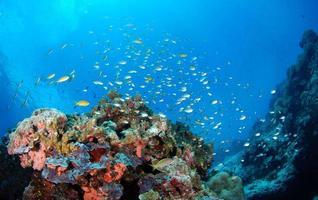 Amazing coral reefs photo