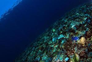mar azul claro. fondo submarino foto