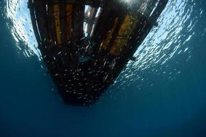 Underwater background, Bali sea, Indonesia photo