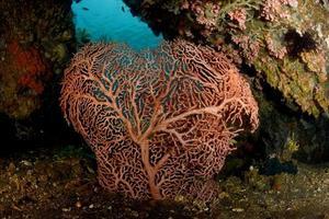 Increíble coral duro en el mar de Bali. foto
