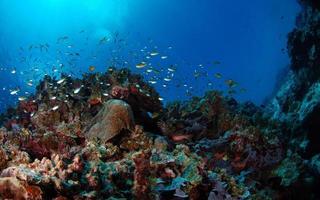 fondo submarino. arrecife de coral de filipinas foto