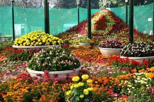 Decorative floral show photo