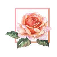 A Frame of Orange Rose watercolor vector