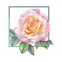 A Frame of Pink Rose watercolor vector