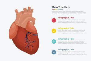 human heart infographic with some point title vector