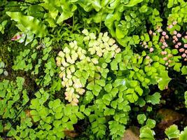 Freshness small fern leaves with moss and algae in the tropical garden photo