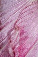 Close up shot of Hollyhock flower petal details photo