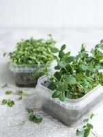 Surtido de micro greens en mesa de madera foto