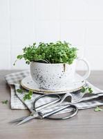 micro verduras de rábano germinado foto