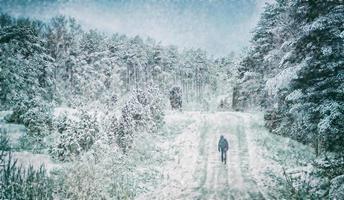 Alone in a winter photo